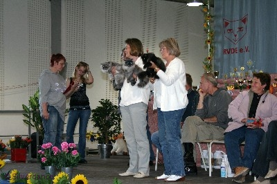 Silverdance litter - Best in Show