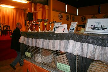 Show decoration Silverdance Cattery