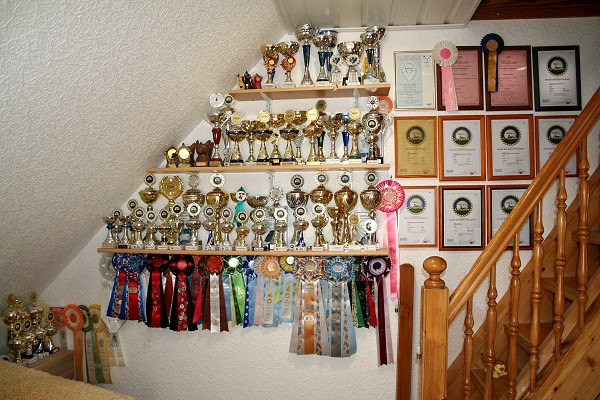 small selection of cups