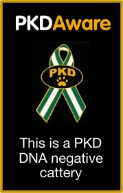 PKD DNA negative tested cattery