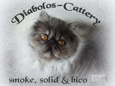 Cattery Diabolos