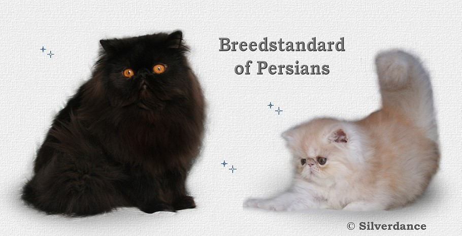 Breedstandard of Persians