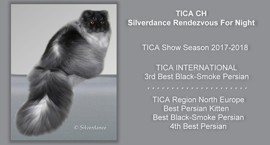 TICA CH/CH Silverdance Rendezvous For Night