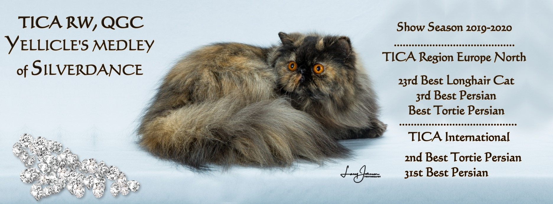 Silverdance Persians - CFA & TICA cattery for smoke persians & solid persians